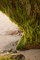 Moss at Moonlight Beach
